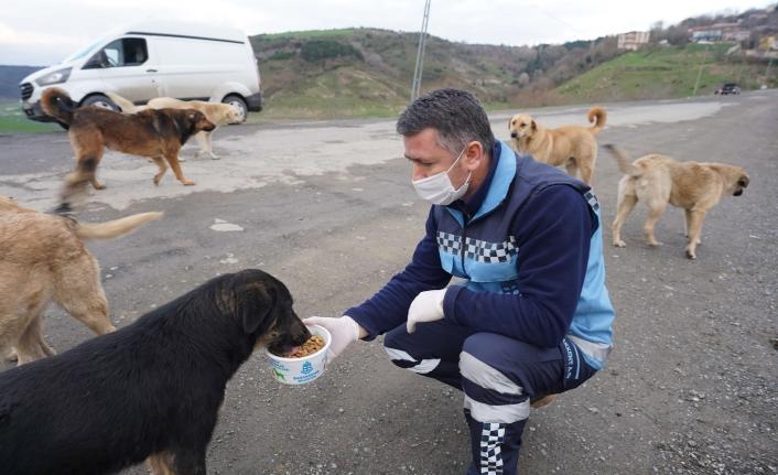 Başakşehir'de Can Dostlarına Sıcak Yardım Eli Uzandı