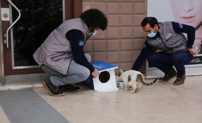 Başakşehir Belediyesi Dünya Kediler Günü'nde Sevimli Dostlarını Unutmadı