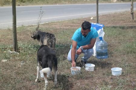 Belediye'den sokak hayvanları için su kapları