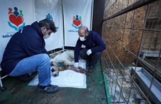 Başakşehir Belediyesi Vurulan Köpeği Hayata Döndürdü