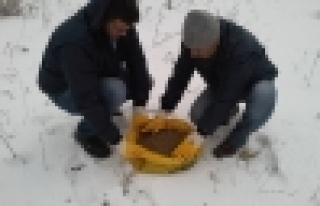 Başakşehir Belediyesi sokak hayvanlarını unutmadı
