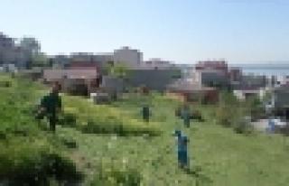 Başakşehir yeşil alanları yaza hazır