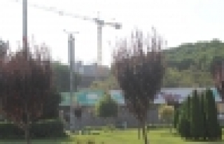 Başakşehir'in Plazaya Değil Çam Ağaçlarına...