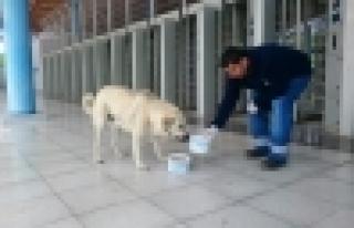 Sokak hayvanları sıcak havalarda da yalnız değil