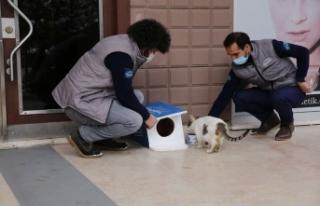 Başakşehir Belediyesi Dünya Kediler Günü'nde...